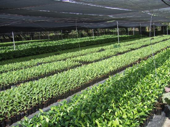 유기농 바나나 전문농장 개관